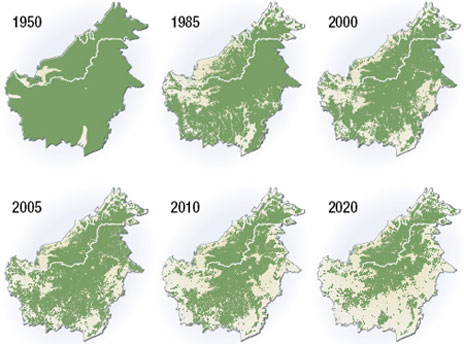 deforestation_borneo